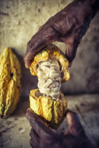 Cocoa in Ivory Coast and Ghana 2017 – African Business